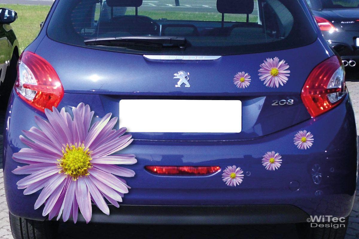 Auto Aufkleber Aster Blumen Autoaufkleber Sticker