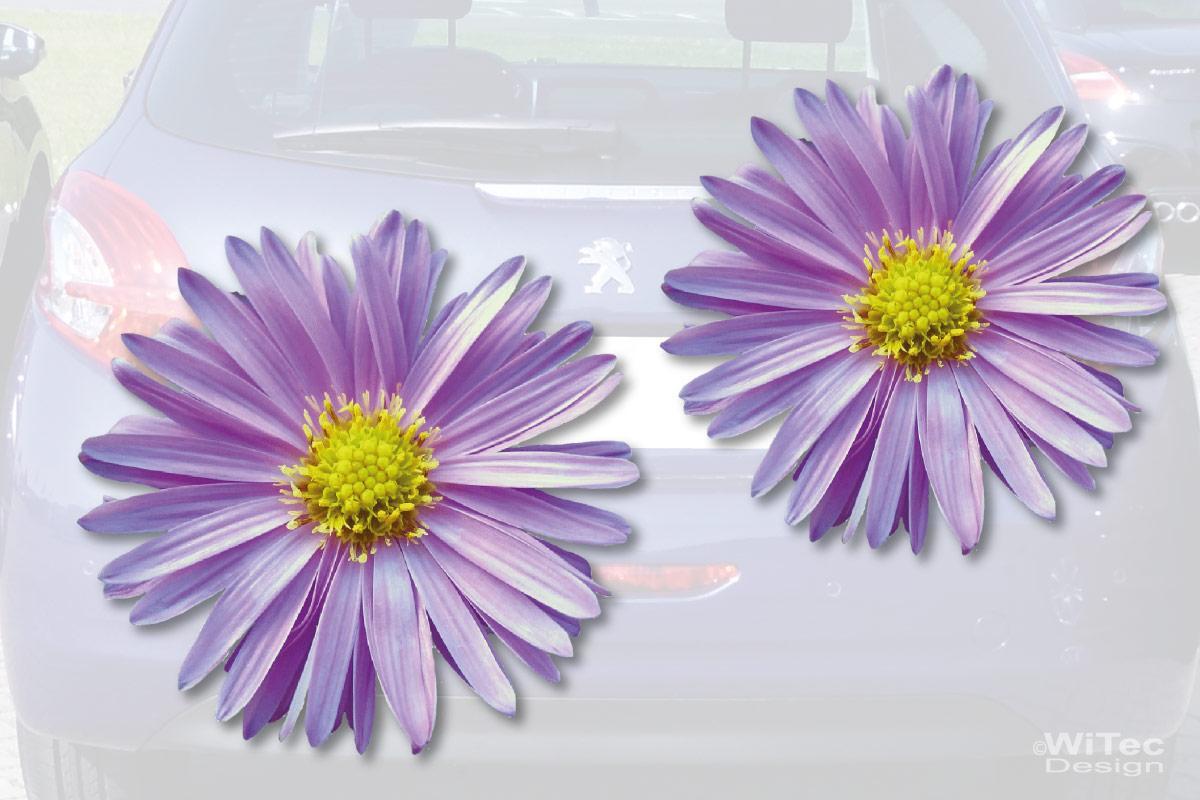 Aster Blumen Auto Aufkleber Autoaufkleber Sticker