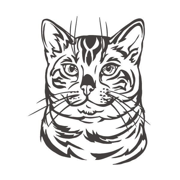 Autoaufkleber Bengal Katze Aufkleber Sticker