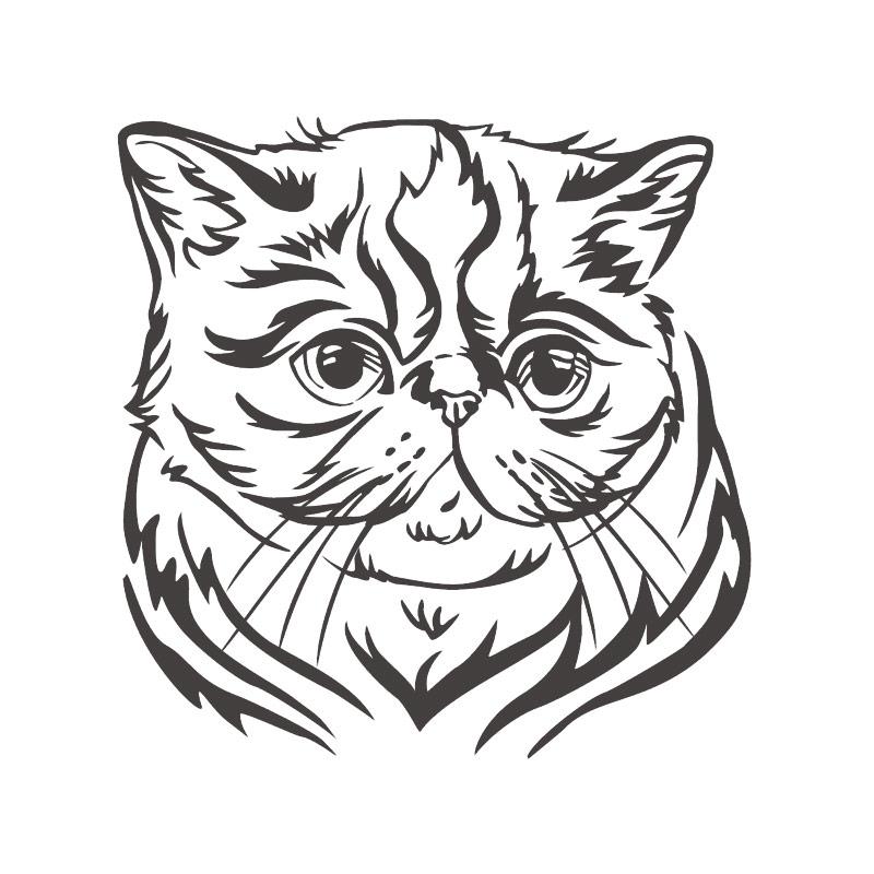 Autoaufkleber Exotic Shorthair Katze Aufkleber Sticker
