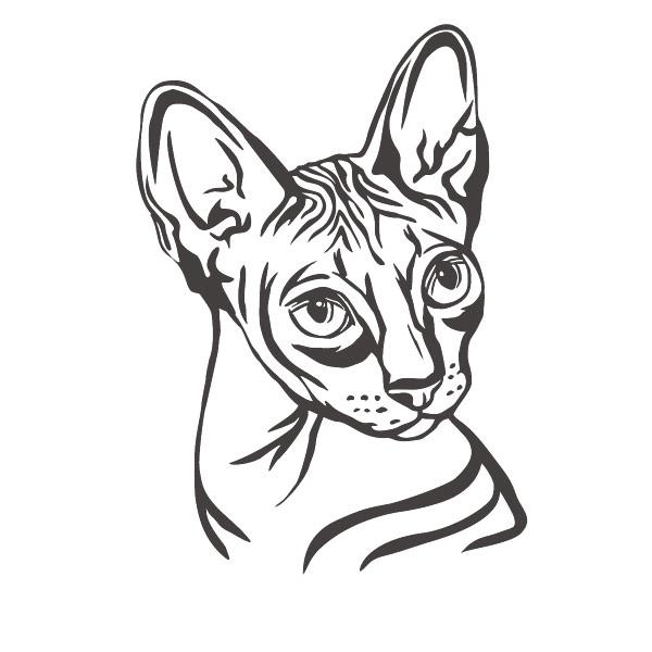 Autoaufkleber Sphynx Katze Aufkleber Sticker