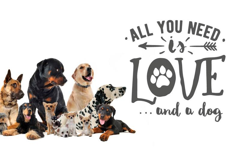 Wandtattoo Hunde all you need is love and a dog