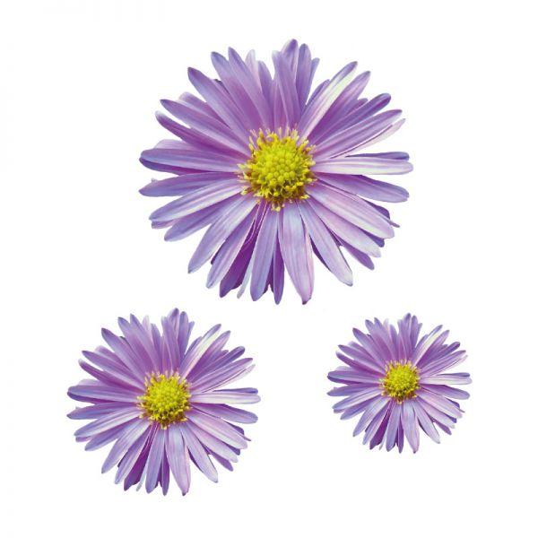 Aster Blumenaufkleber Autoaufkleber Digitaldruck Aufkleber
