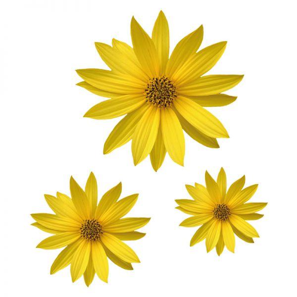 Helianthus Sonnenblume Blumenaufkleber Autoaufkleber Digitaldruck Aufkleber
