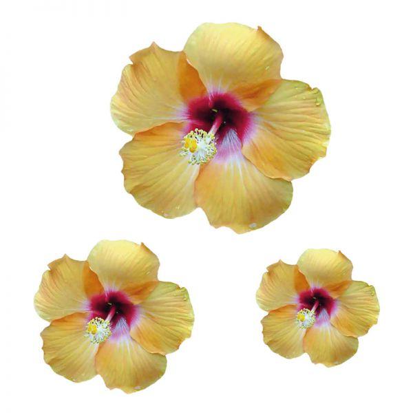 Hibiskus Blumenaufkleber Autoaufkleber Digitaldruck Aufkleber